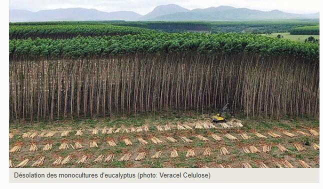 Plantations en Amazonie
